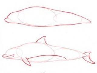 Golfinho-2
