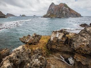 Ninho-do-Rabo-de-Junco-Ilha-do-Chapeu-Fernando-de-Noronha_7744