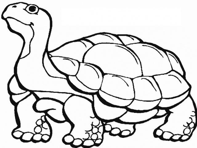 Animais de Darwin