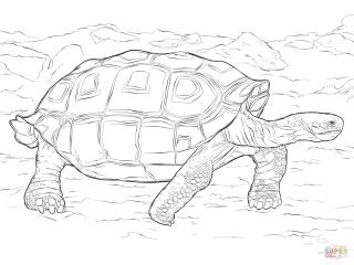 Tartaruga-Galpagos-1