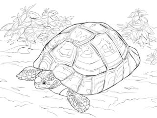 Tartaruga-Galpagos-6