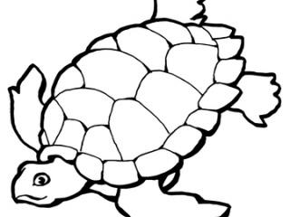 Tartaruga-marinha-2