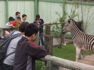 Visita-ao-zoolgico